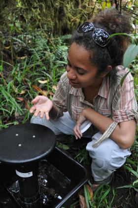 Samoa smells the not-so-fragrant water in a gravid mosquito trap, which uses stagnant water to attract female mosquitoes.