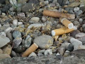 Cigarette butts in gravel