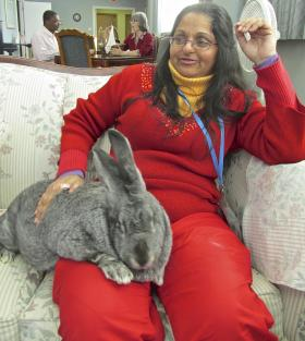 Nisha Full Moon with Jane Eyre, a Flemish Giant rabbit, at the Tower Grove Manor.