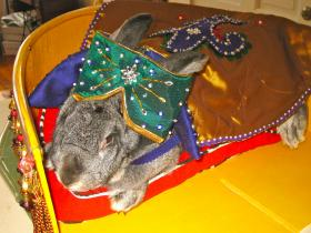 The royally attired Jane Eyre will be in the Pet Parade Feb. 23.