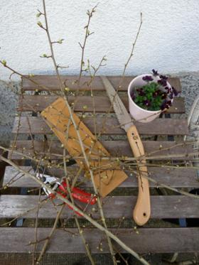 Pruned hawthorn tree branches, along with tools of the pruning trade.
