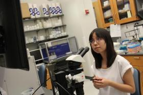 Yinzi Liu studies zebrafish embryos in a Washington University lab.  She'd like to stay in St. Louis after graduation, but is having a hard time finding an employer to sponsor her visa.