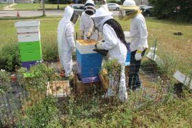 Youth in Sweet Sensations cleaning out bee hives.