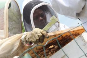 Sweet Sensations student beekeepers