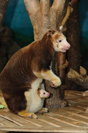 (Ray Meibaum/Saint Louis Zoo)