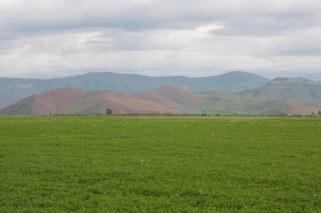 Alfalfa fields in Idaho. (Flickr Creative Commons user Sam Beebe/Ecotrust)