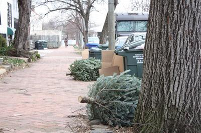 Christmas trees on the curb in Washington, D.C. last year. St. Louis has a program for Christmas trees to be recycled instead of hitting the garbage dump. (Via Flickr/ brunosan)
