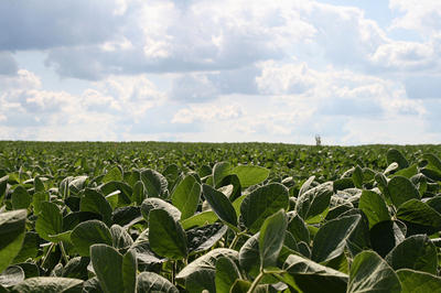 A field of soybean plants in Illinois. Herbicide-resistant soybeans are the subject of one of nine projects Monsanto discussed on a conference call with reporters today.  (via Flickr/jasonippolito)