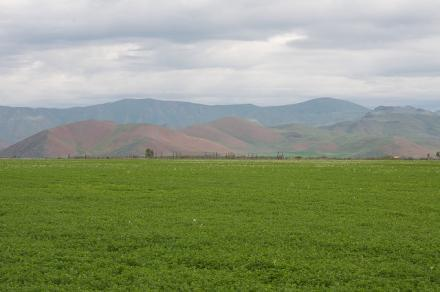 Alfalfa fields in Idaho.