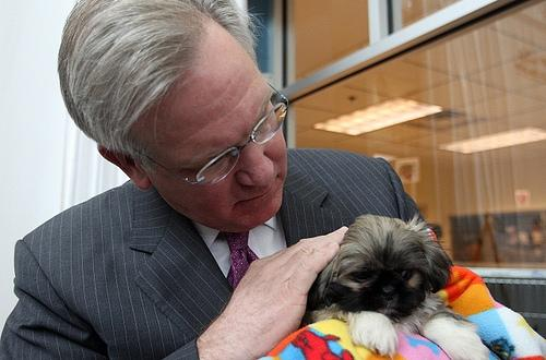 Missouri Governor Jay Nixon gets a closer look at Truman, an eight-week-old Peekanees puppy that was rescued from poor breeding conditions, before a press conference in St. Louis on April 9, 2009. Nixon wants to increase oversight of dog breeders.