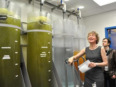Developmental geneticist Liliana Solnica-Krezel speaks with visitors touring Washington University's zebrafish facility on Friday. The large tanks on the left hold algae and small freshwater organisms called rotifers – food for the young zebrafish.