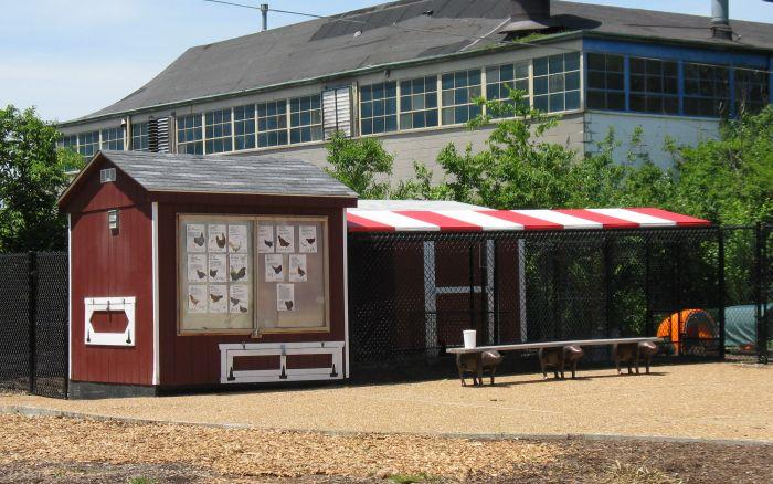 The Maplewood Richmond Heights School District's chicken coop is just one of the many food sustainability projects going on in the school system.