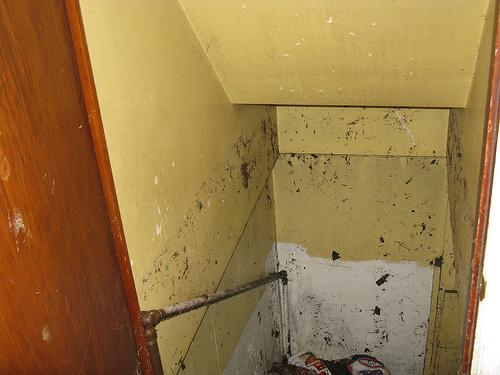Water filled Annie Anderson's basement in the space of an hour. The debris line marks the crest of the sewer back-up.