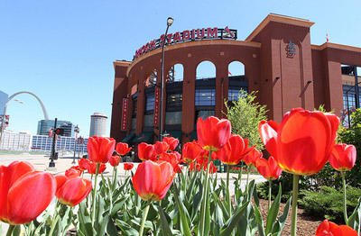 Busch Stadium, the home playing field of the St. Louis Cardinals.The Cardinals and the Kansas City Royals will team up for an interleague series to help raise money for tornado recovery efforts in Joplin, Mo.