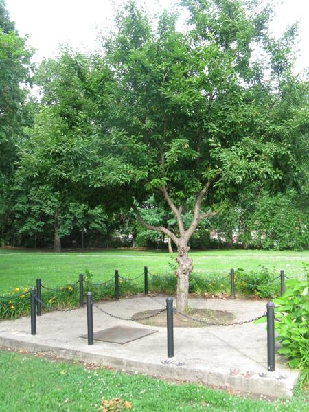 The transition to the city's current animal control strategy started when Rodney McAllister was mauled to death 10 years ago by a pack of dogs in Ivory Perry Park, where this memorial tree now stands.