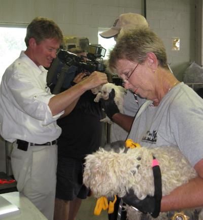 Mo. Atty. Gen. Chris Koster visits with Humane Society of Missouri staff, and a few puppies, at the Humane Society's facility in St. Louis on July, 14, 2011.