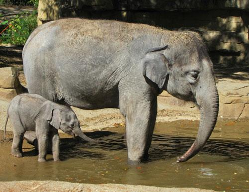 Kenzi takes her first swim with her mother Rani on September 9, 2011