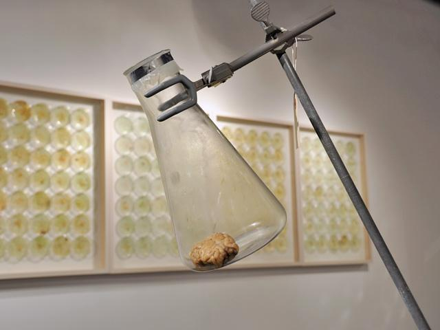 This sculptural work by Leax includes a sheep's brain contained in a laboratory flask.