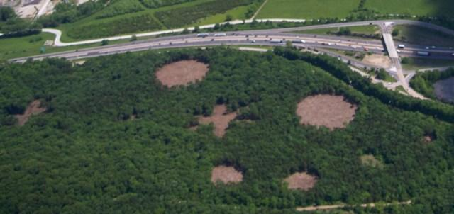 A flyover photo of experimental glades at Washington University's Tyson Research Center.