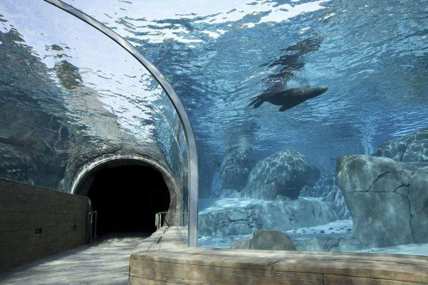 This tunnel will give visitors an underwater view of Sea Lion Sound and its inhabitants.