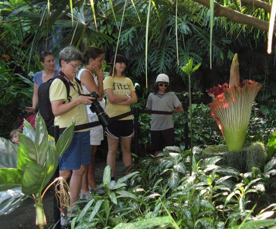 Visitors look at, photograph, and smell the corpse flower.