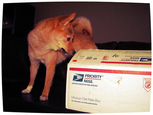 The U.S. Postal Service says that 32 times in FY2012, postal workers in St. Louis had interactions with dogs that were definitely not this cute.