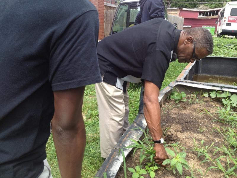 Creator of the Sweet Potato Project Sylvester Brown pulls weeds from the lot, located in The Ville neighborhood/