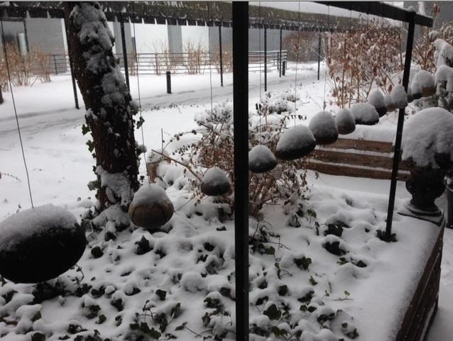 Snow bouquets abound in an apartment courtyard in the Central West End.