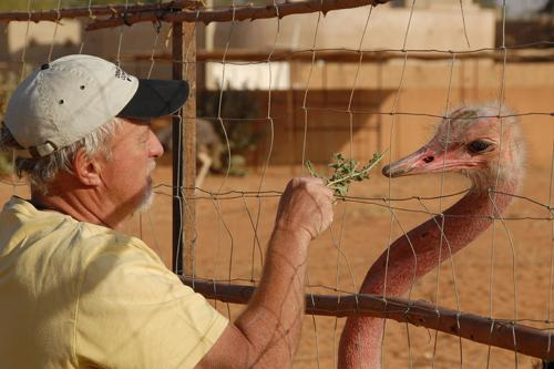 John Newby feeding an ostrich