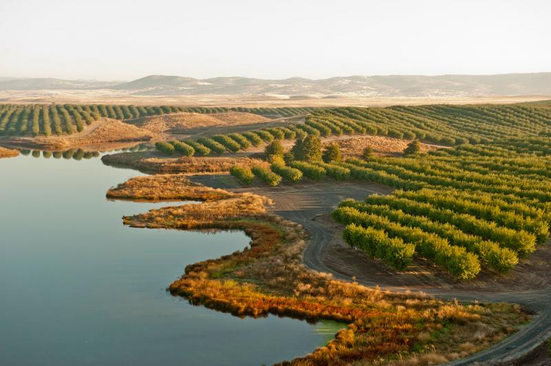 The book features stunning pictures of almond orchards by Robert Holmes