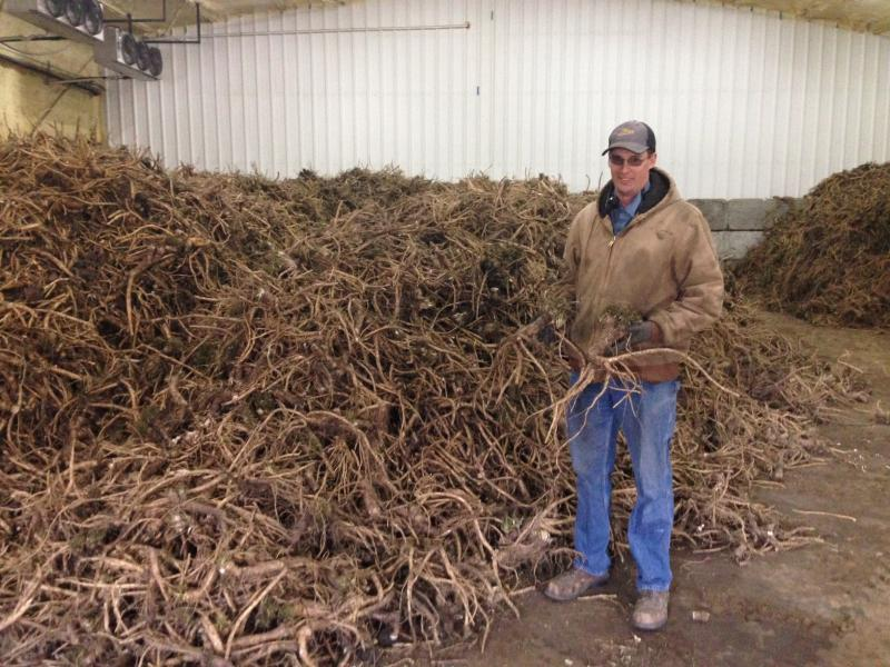 Heepke stands in a refrigerated barn with recently harvested horseradish in early April. He farms with his two younger brothers and their dad outside Edwardsville.