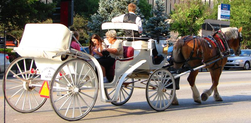 A horse pulls a carriage on Market Street downtown.