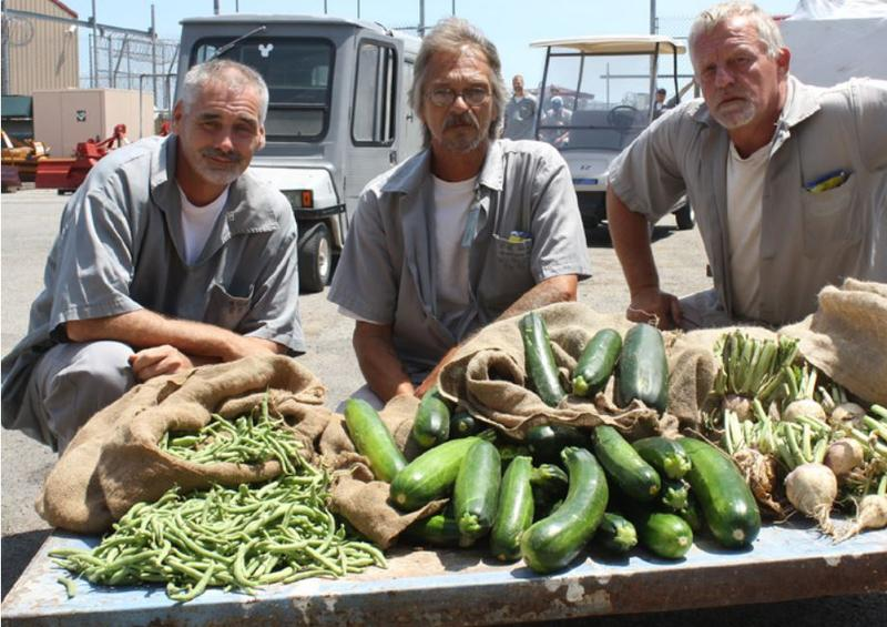 Offenders harvest fresh fruits and vegetables at gardens located at Missouri Department of Corrections' institutions to donate to the needy.