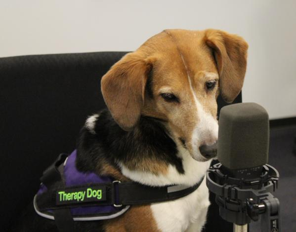 Pasta contemplates a question from 'St. Louis on the Air' host Don Marsh on March 10, 2015, at St. Louis Public Radio.
