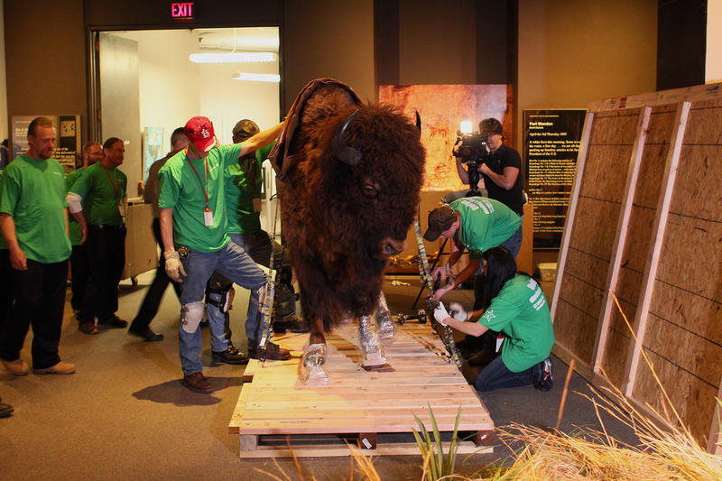 The bison will move to Fort Larned in Kansas