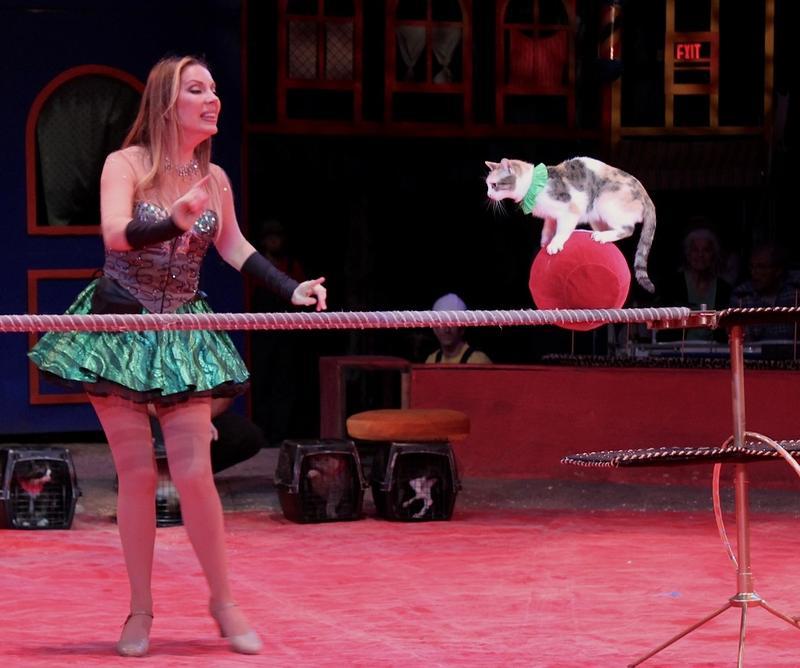 One of Mayya Panfilova cats astound every cat person.