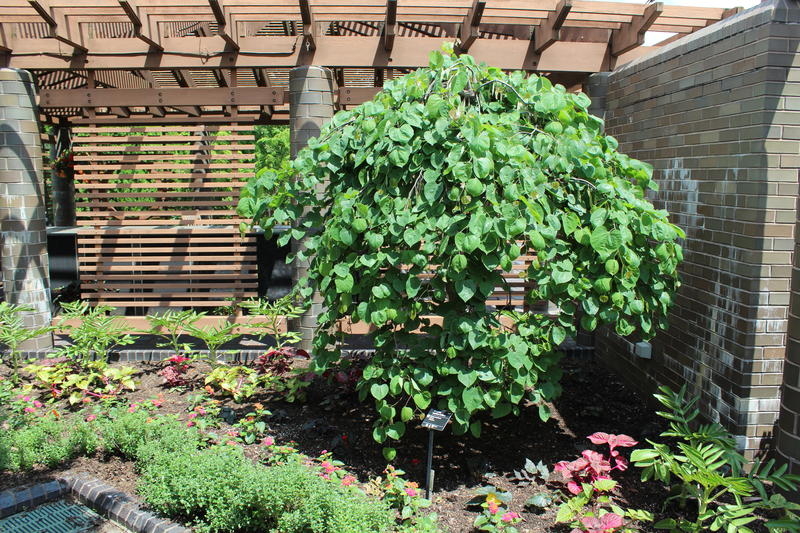One demonstration garden at the Missouri Botanical Garden gives city-dwellers inspiration for plants that do well in small lots.