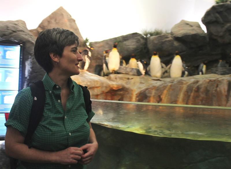 Véronique LaCapra greets a group of King penguins.