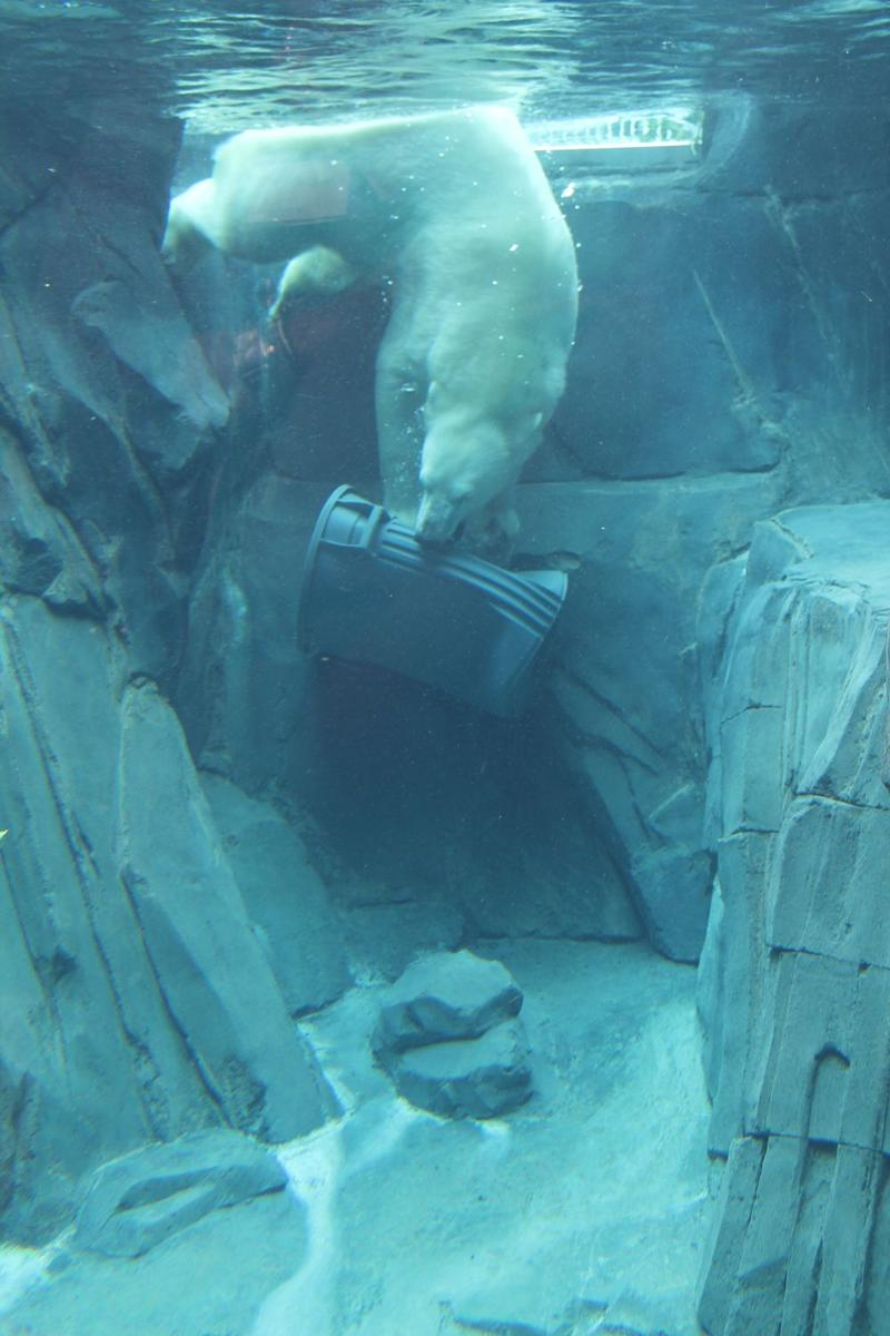 Kali dives with a plastic garbage can to the bottom of his 12-foot-deep pool.