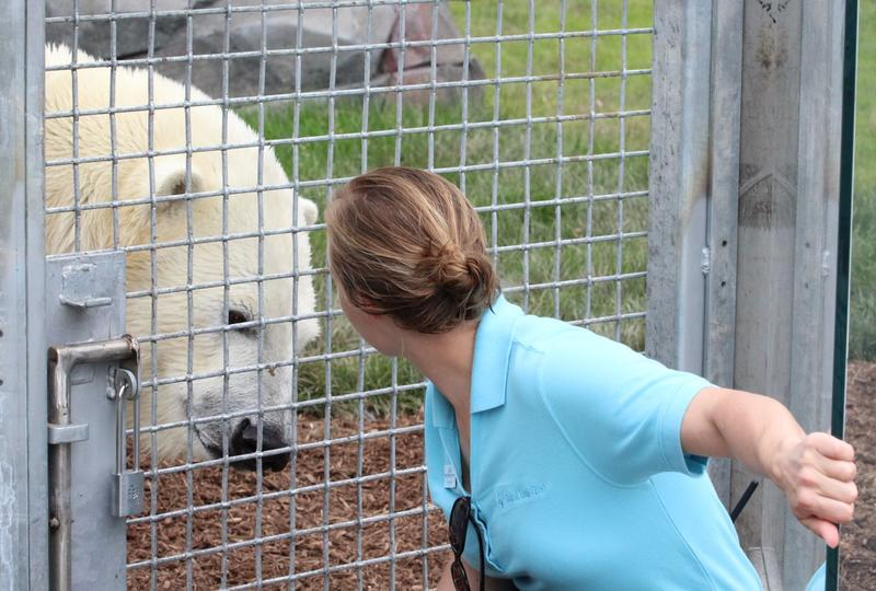 Kali interacts with Carnivore Zoological Manager Julie Hartell Denardo.