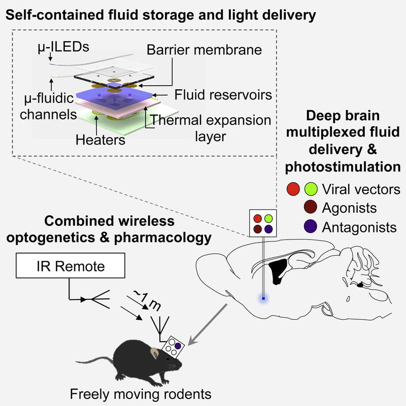 This diagram describes how the new wireless device functions. Source: Jeong JW, McCall JG, et al. Wireless optofluidic systems for programmable in vivo pharmacology and optogenetics. Cell, published online July 16, 2015.