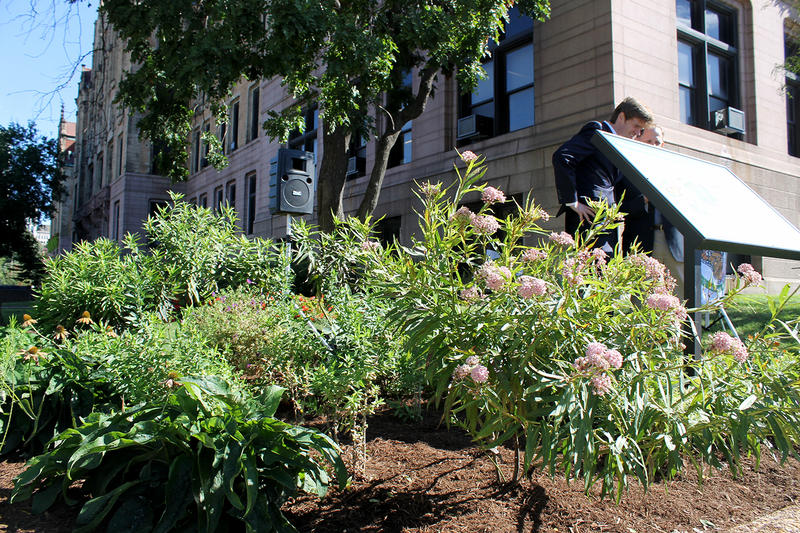 St. Louis city hall now has monarch habitat certified by the National Wildlife Federation.