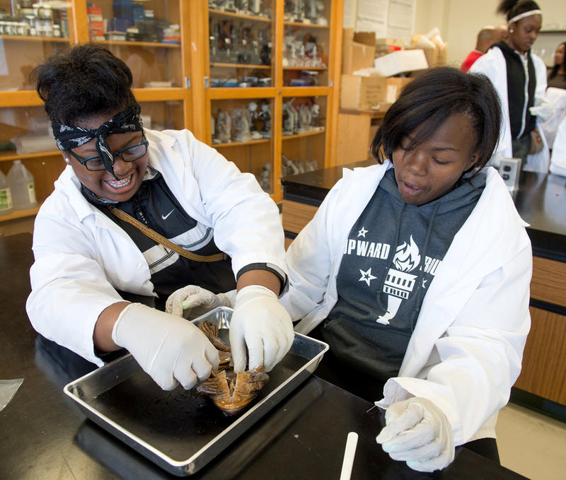 Jameela Tidwell (left) and Molicia Hammond dissect a from Tues. Oct. 6, 2015 in the Upward Bound program at SIUE's East St. Louis Center. Both are sophomores at East St. Louis Senior High.