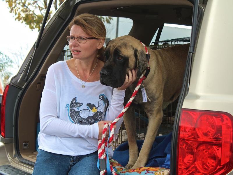 Volunteer Joanna Gable with Ziva, a mastiff mix, who was Maryland-bound.