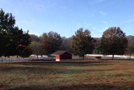 Grant's Farm - horses