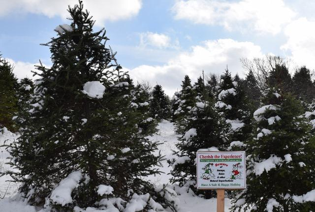 National Christmas Tree Association's Location May Surprise You  - Location Of Christmas Trees
