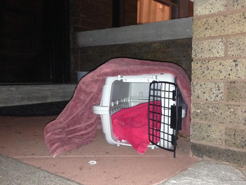 An empty cat carrier sat on Maire Murphy's front porch for more than two months,  waiting for Matt the Cat to wander in.