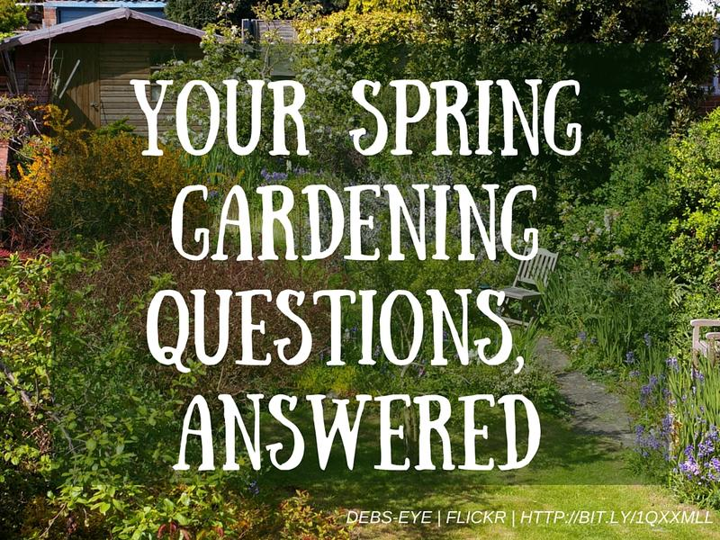 After a strange spring season in st louis we answer your for Gardening questionnaire