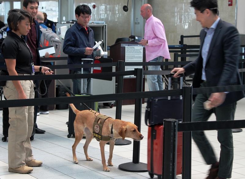 K9 Inspector Jasmine Bourne and her partner, Eette, screen a traveler's luggage at Lambert Airport.