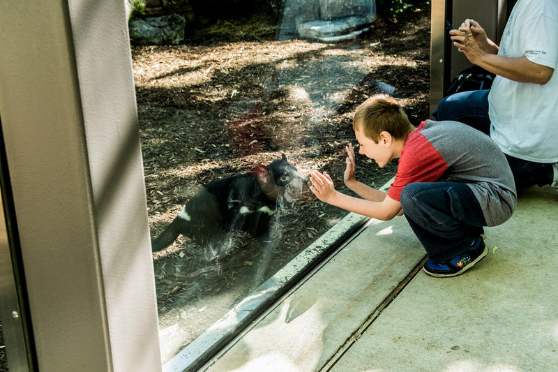 The Tasmanian devil exhibit at the Saint Louis Zoo